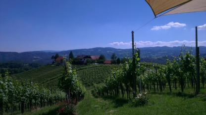 Sturm & Maroni mit richtigen Wein - Blick auf Weinberger