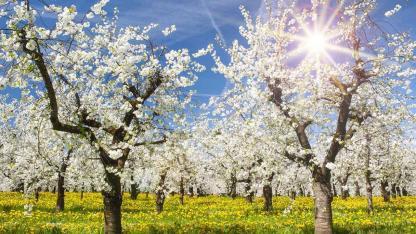 So schneidest du deine Obstbäume richtig