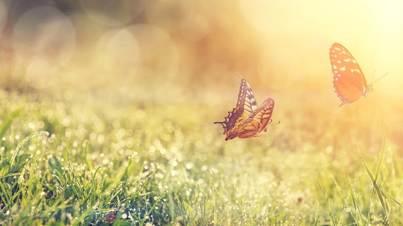 Der perfekte Rasen - Schmetterling
