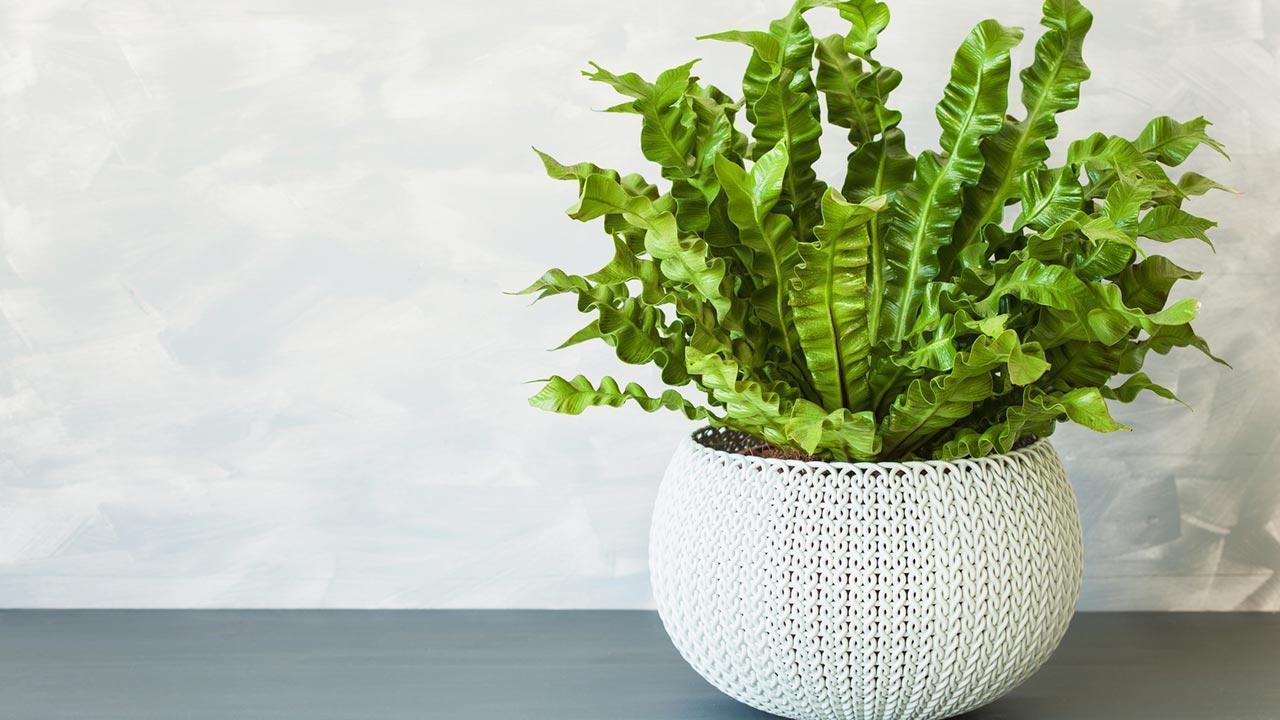 Zimmerpflanzen sind gut für das Raumklima