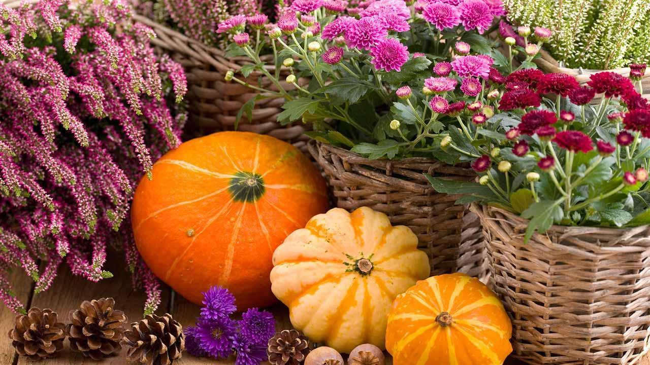 Die schönsten Deko-Ideen für Ihren Garten im Herbst - Herbstliche Deko