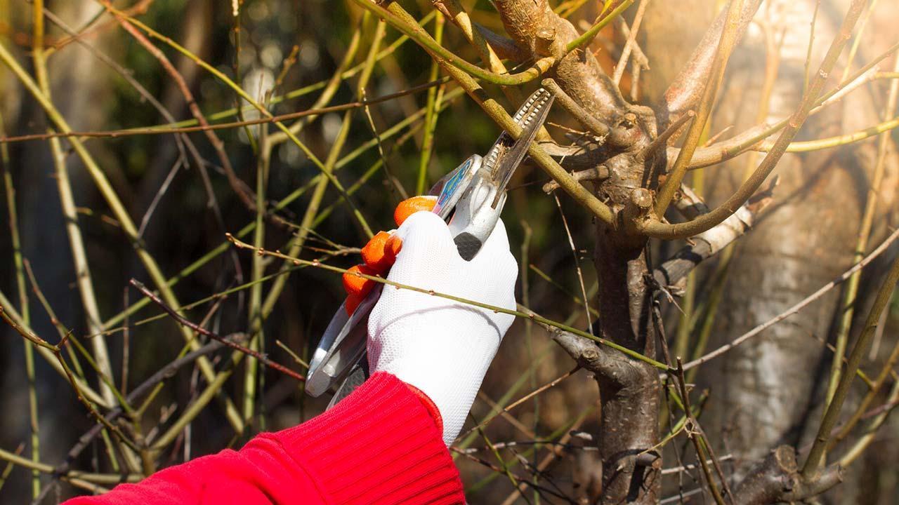 Gartenarbeit im Herbst - Sträucher schneiden
