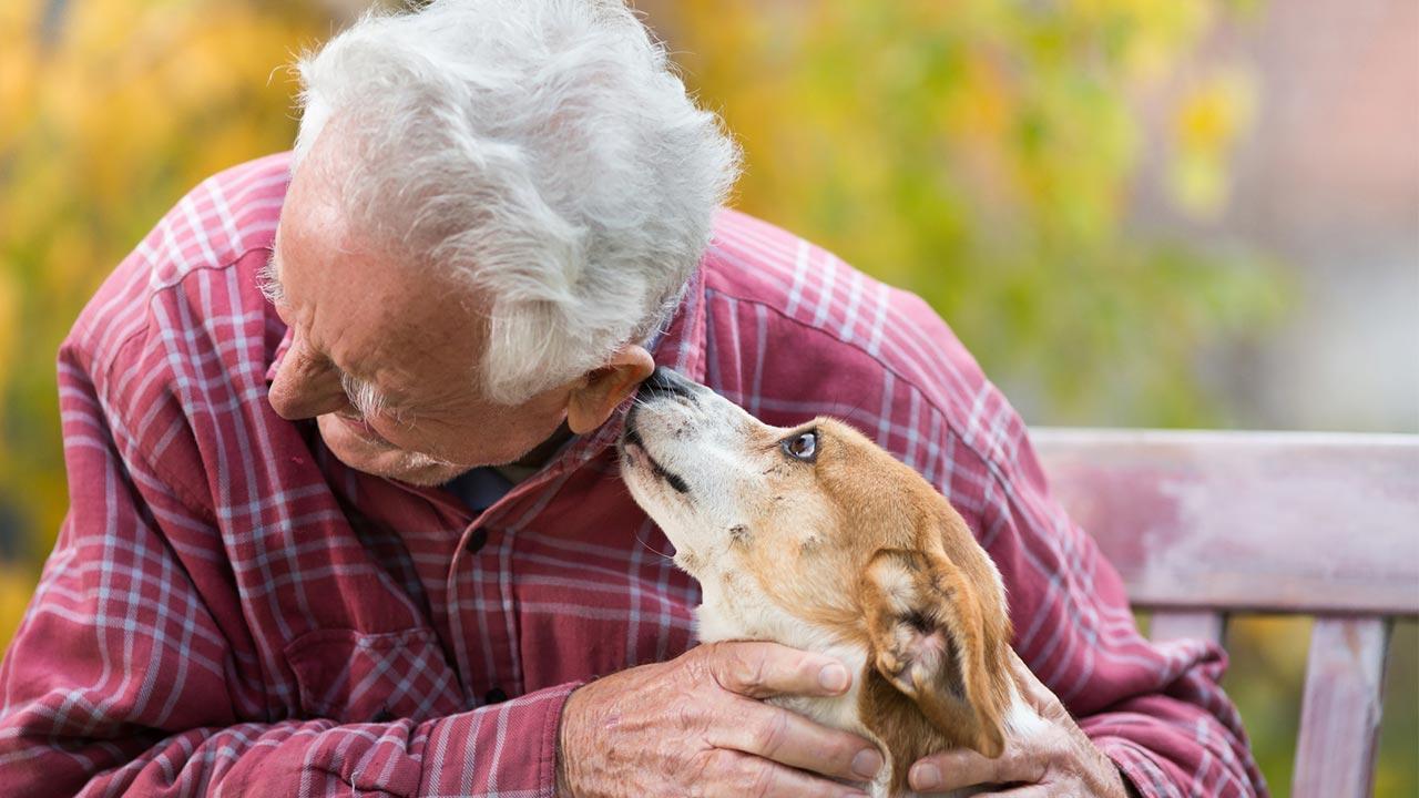 Welcher Hund passt zu mir - Hunde mit Senioren