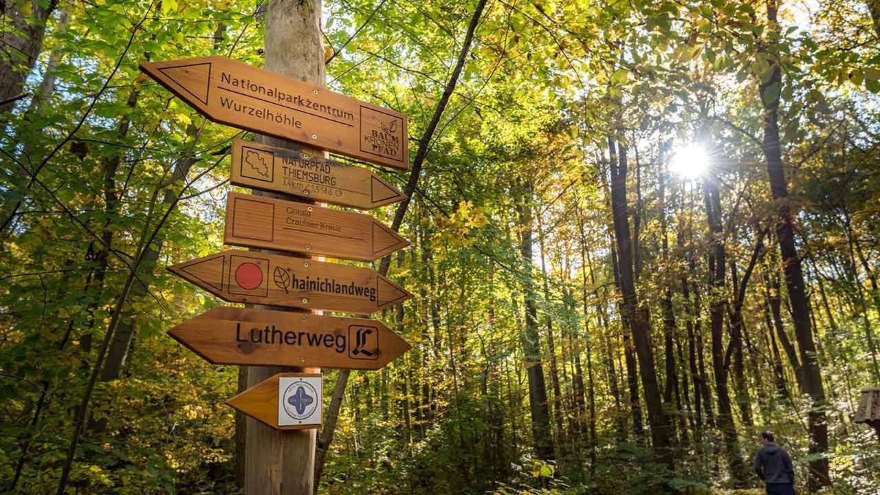 Wandern im Nationalpark Hainich in Thüringen - Wegweiser