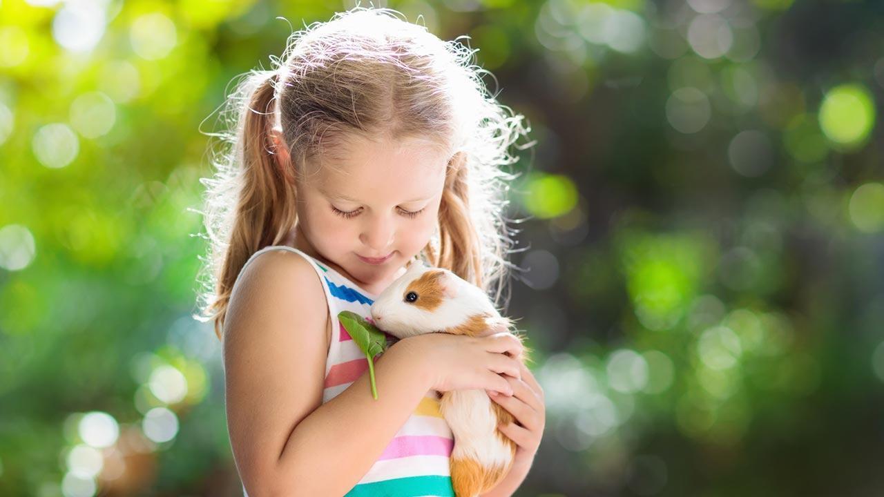 Das Meerschweinchen - ein perfektes Haustier für Kinder - Kind mit Meerschweinchen
