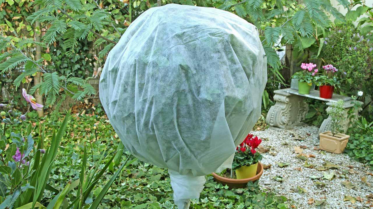 Wann sollten Sie Ihre Topfpflanzen zurück in Haus holen - winterfest eingepackt