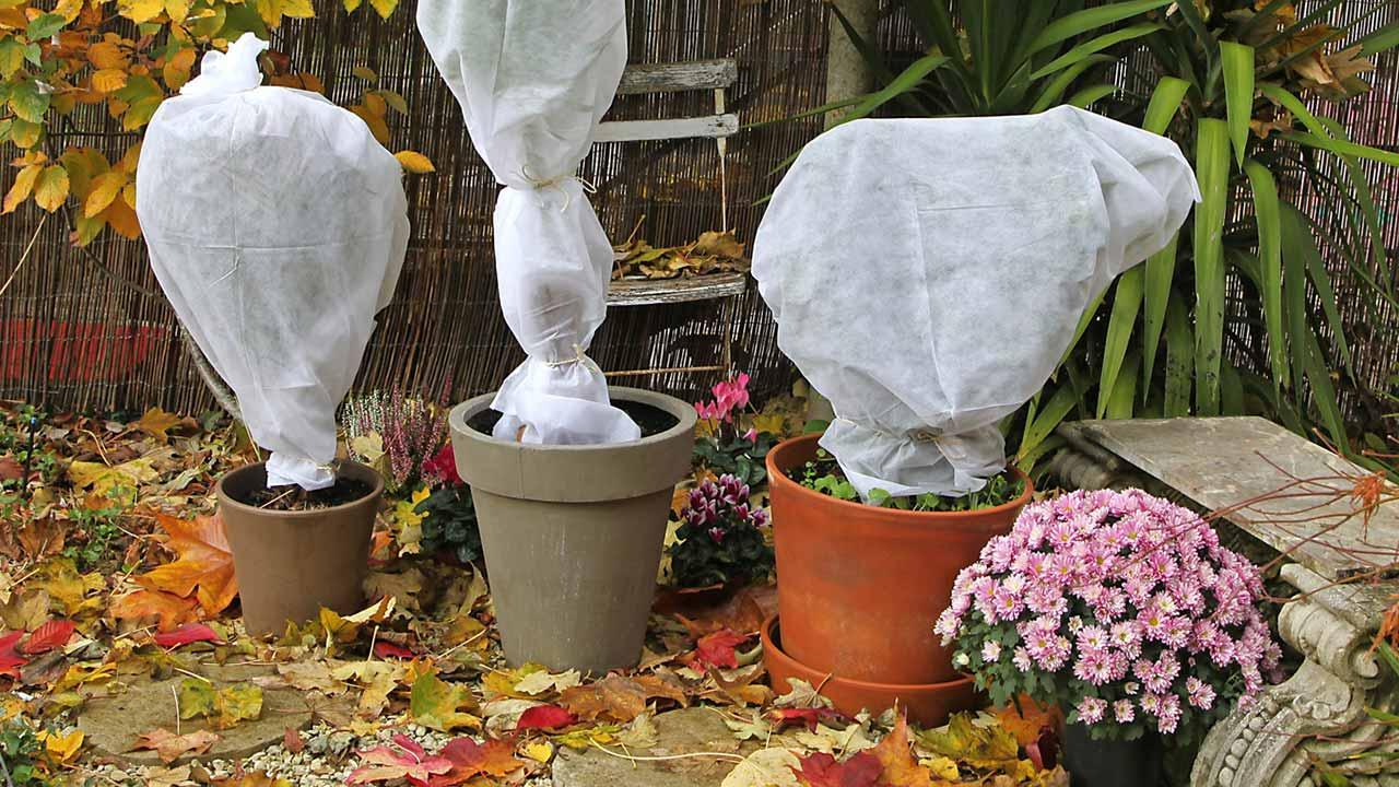 Wann sollten Sie Ihre Topfpflanzen zurück in Haus holen - winterfest