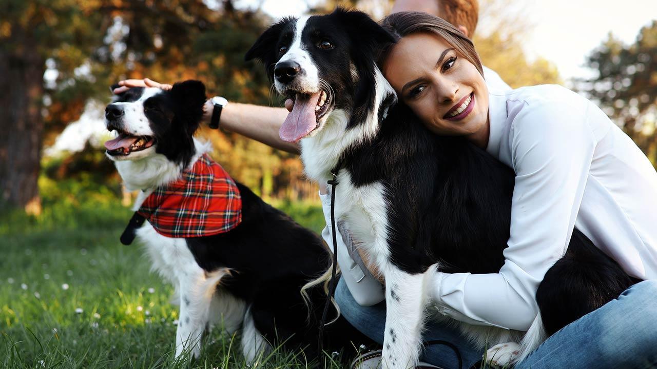 Welcher Hund passt zu mir - 2 Hunde