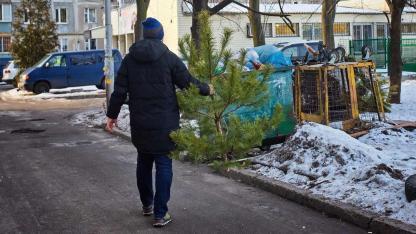 Weihnachtsbäume entsorgen