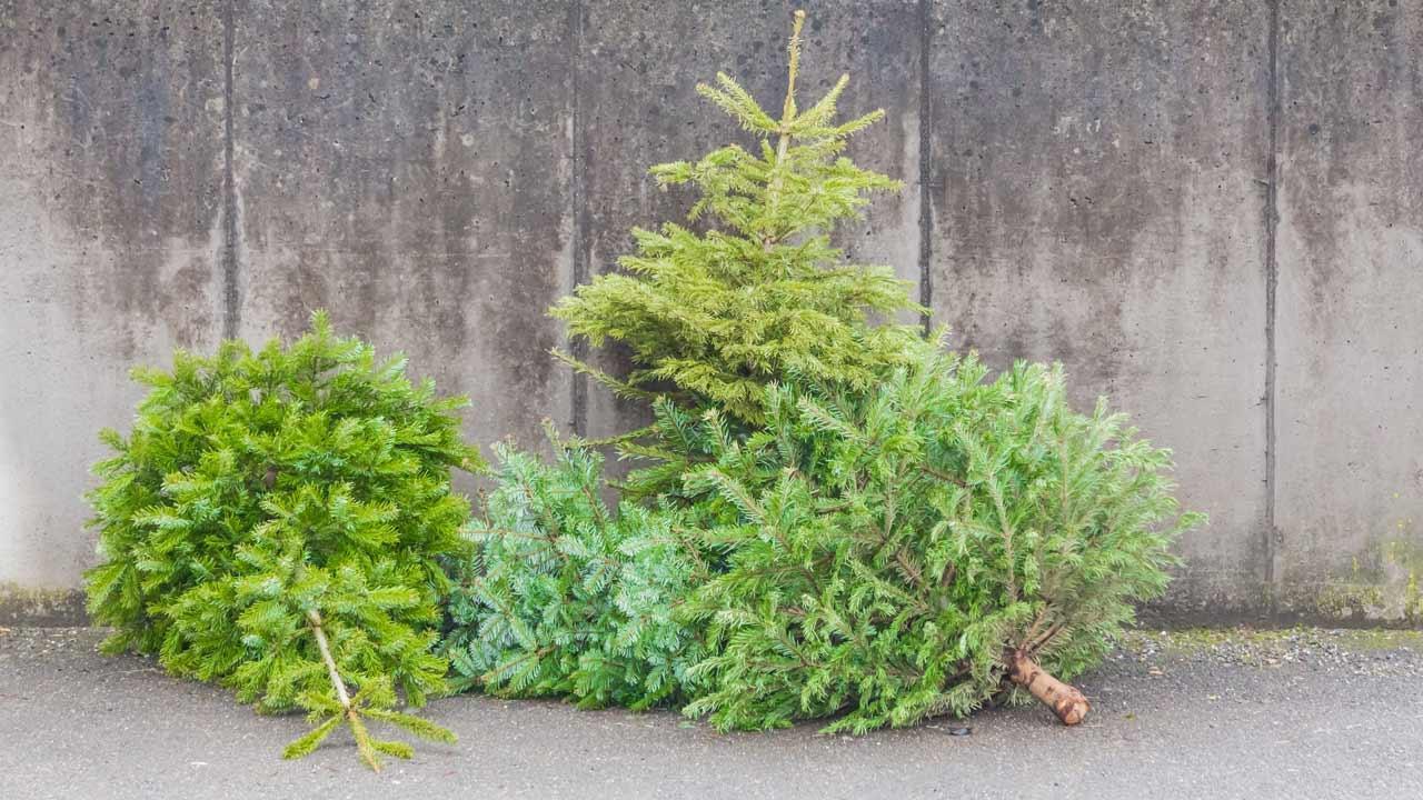 Wie entsorge ich meinen Weihnachtsbaum - illegales Baumdepot
