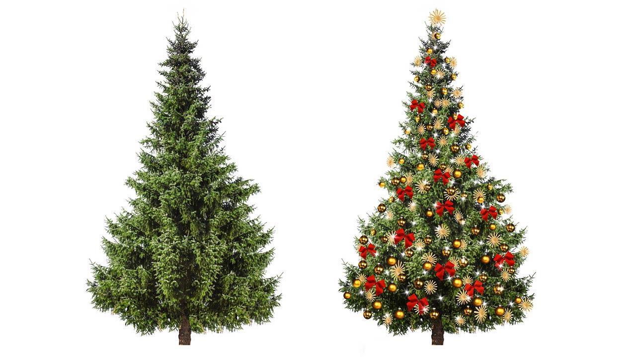 Der perfekte Weihnachtsbaum im Haus - geschmückt und ungeschmückt