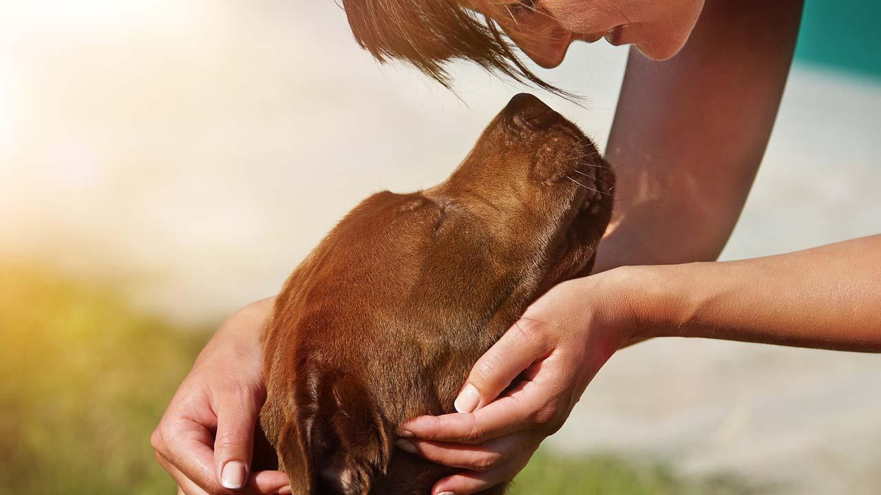 Wie bereite ich meine Haustiere auf Silvester vor - Frau streichelt Hund