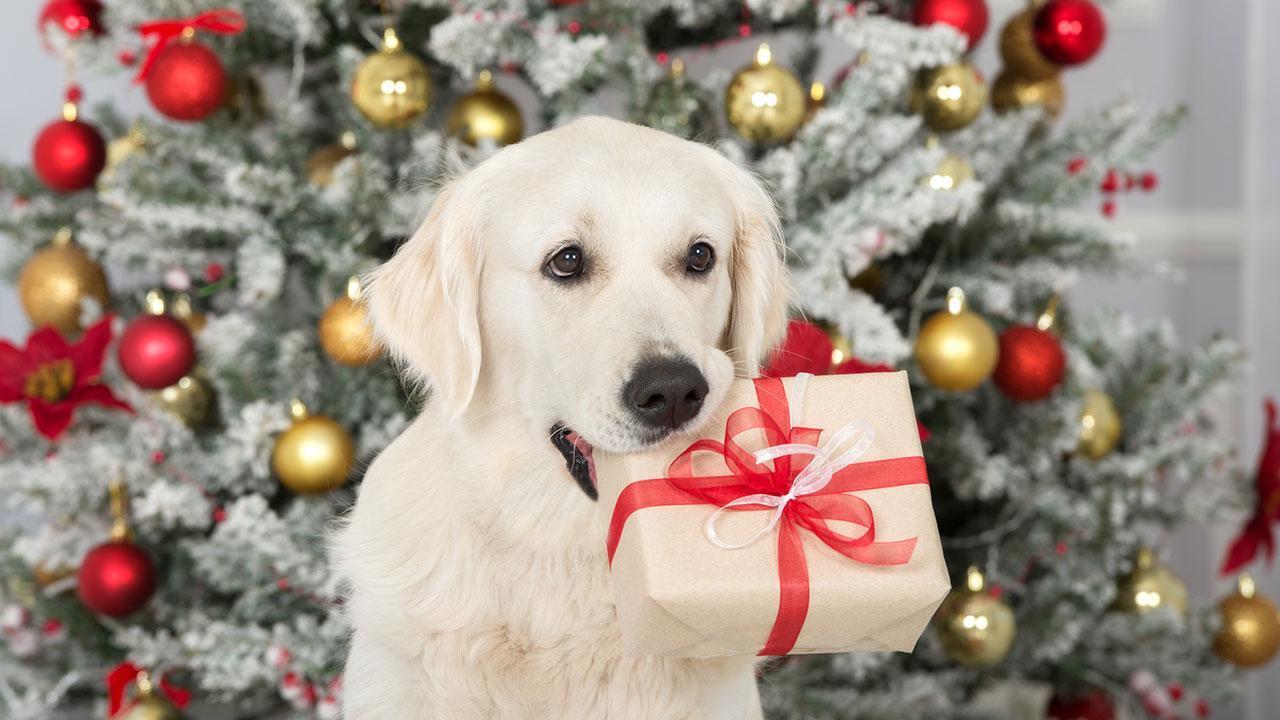 Was schenke ich meinem Haustier zu Weihnachten - Hund mit Geschenk im Maul