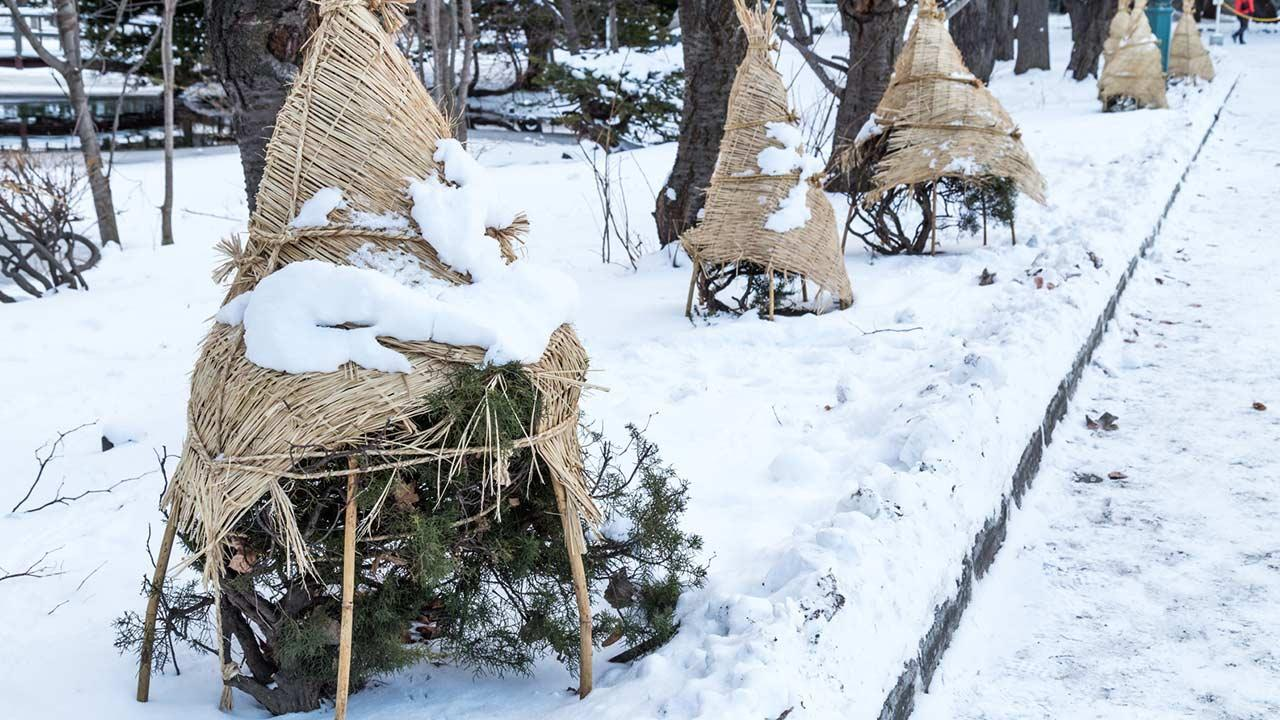 Frostschäden an Bäumen vermeiden - in Planen eingepackt