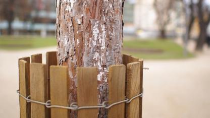 Frostschäden an Bäumen vermeiden - Schutzmantel für junge Bäume