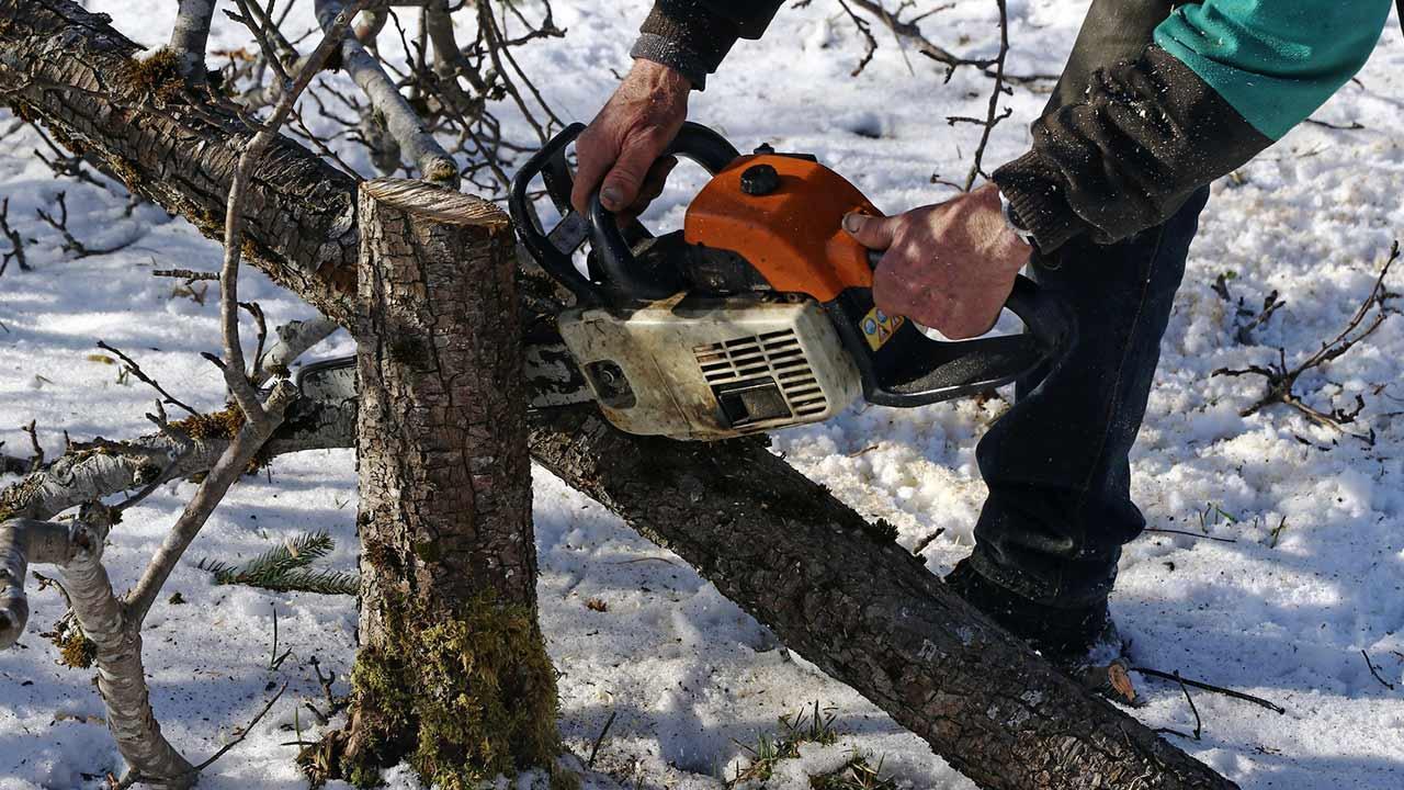 Bäume fällen - Bitte immer nur im Winter - Arbeit mit der Motorsäge