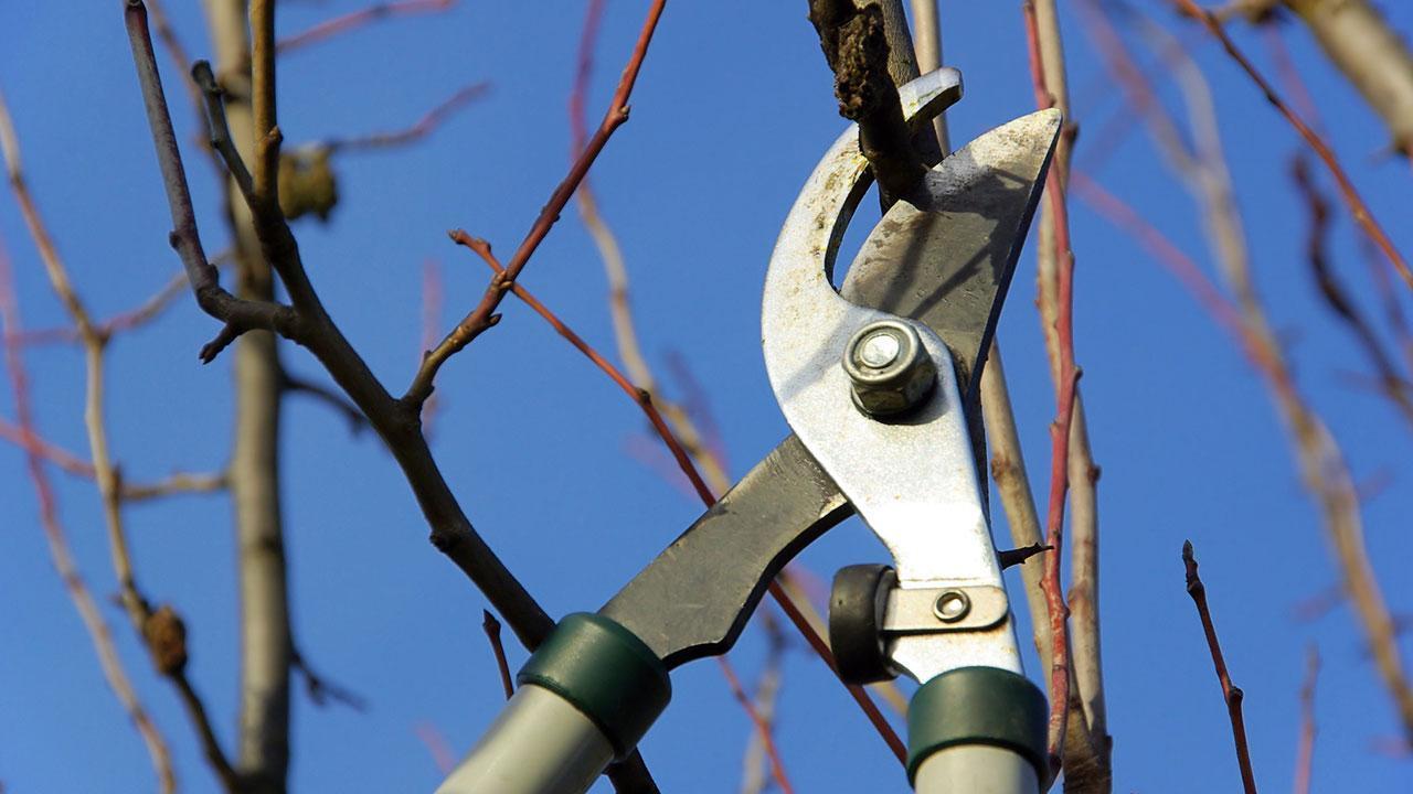 Obstbaumschnitt im Februar - scharfe Baumschere