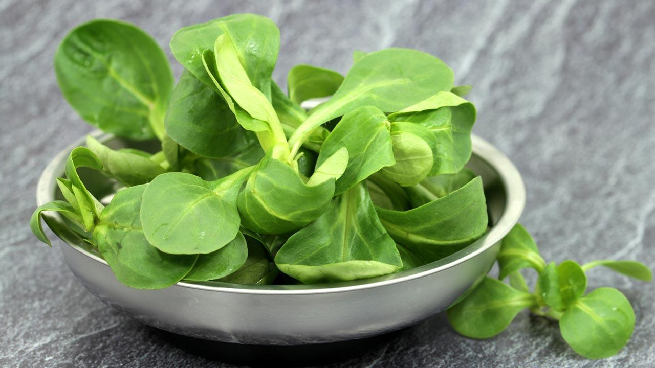 Leckere Rezepte mit Feldsalat - in einer Schüssel