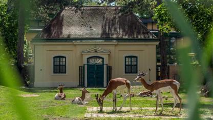 Die schönsten Tierparks in Österreich