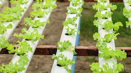 Gemüse im März anbauen