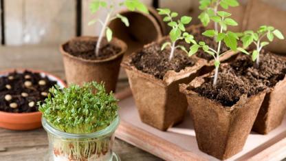Wie man Pflanzen auf der Fensterbank anbaut