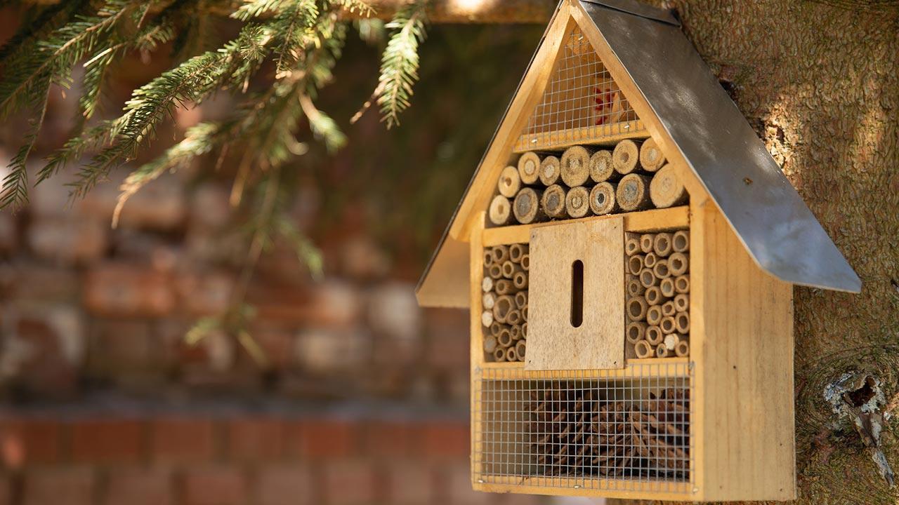 Insektenhotel selbst bauen, Tipps und Tricks - an einem Stamm