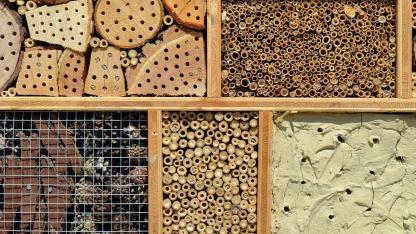 Ein Insektenhotel selbst bauen