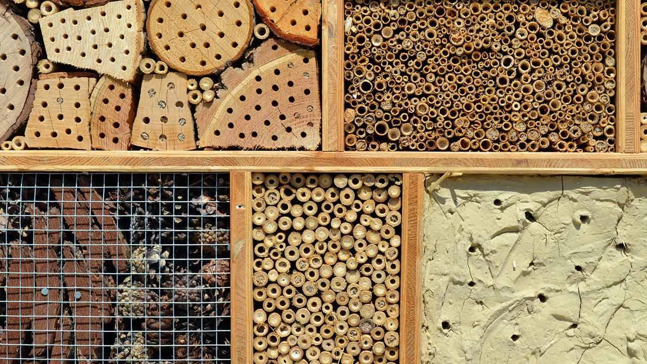 Insektenhotel selbst bauen, Tipps und Tricks - Nahaufnahme