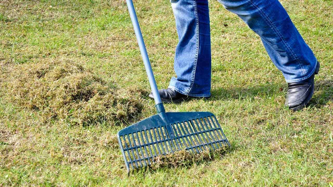 Den Rasen vertikutieren - totes Gras