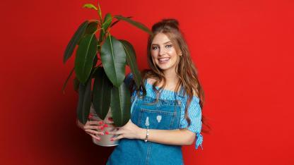 Wann sollten Sie Ihre Topfpflanzen zurück ins Haus holen ?