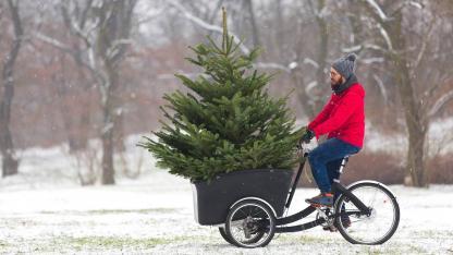 Der perfekte Weihnachtsbaum im Haus