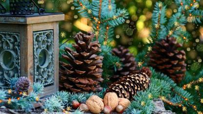 Waldweihnacht im eigenen Garten