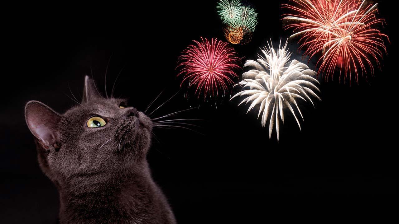 Wie bereite ich meine Haustiere auf Silvester vor - Katze mit Feuerwerk