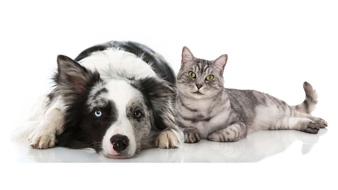 Wie bereite ich meine Haustiere auf Silvester vor - Hund und Katze