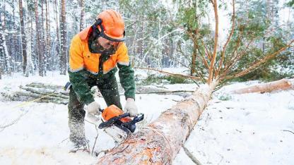 Bäume fällen - Bitte immer nur im Winter - Holzfäller bei der Arbeit