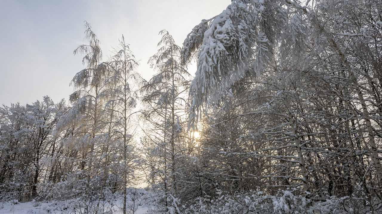 Gartenpflanzen vor der Schneelast schützen - Schnee auf Bäumen