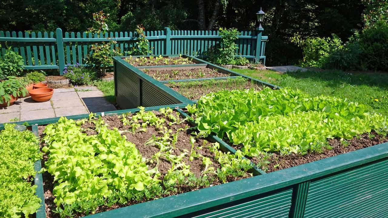 Welches Gemüse kann ich im März pflanzen - Hochbeete