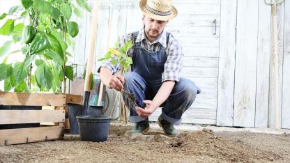 Gewächshaus - diese Pflanzen fühlen sich hier im März besonders wohl
