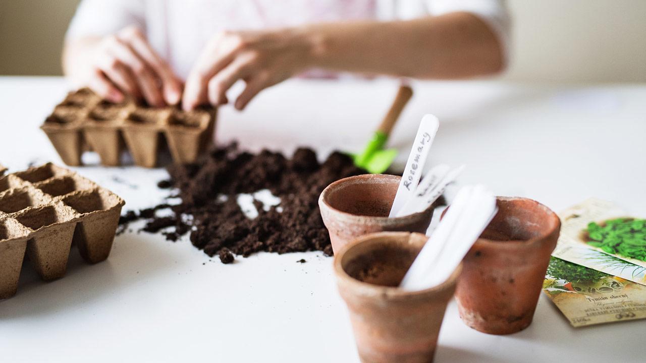 Aussaat im April - anpflanzen