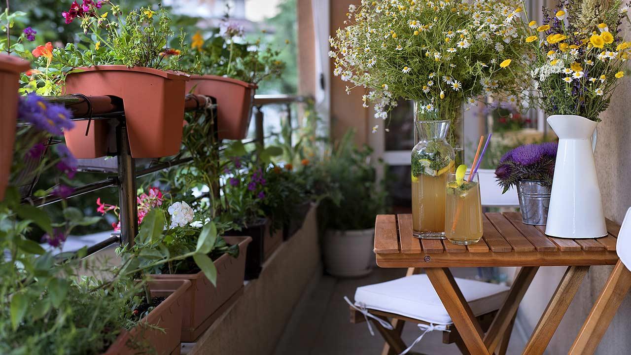 Platzsparende Nutzpflanzen für Ihren Balkon - Kräuter und Blumen