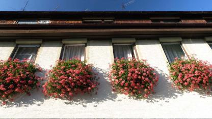 Blumenkästen schön bepflanzen