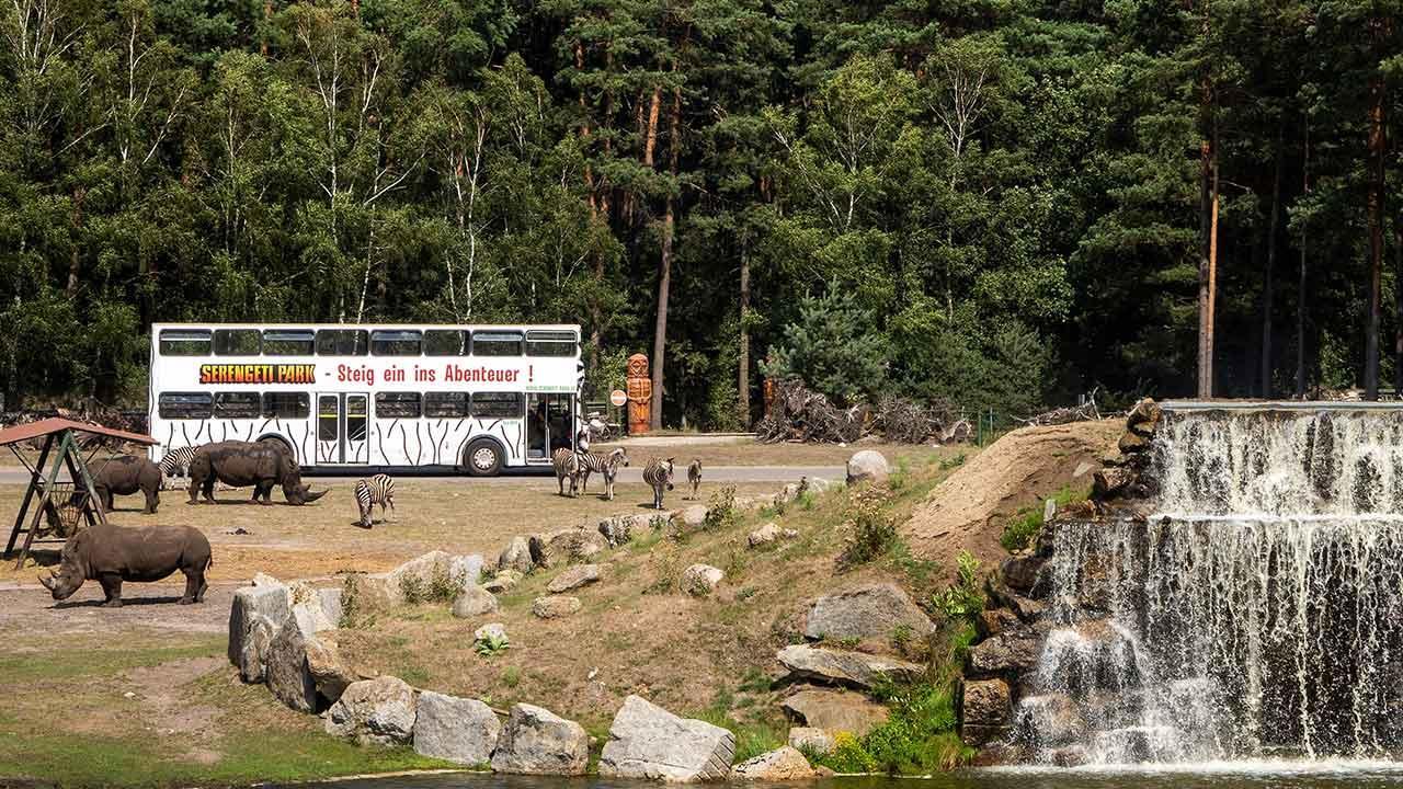 Serengetipark Hodenhagen - Park Bus mit Nashörnern