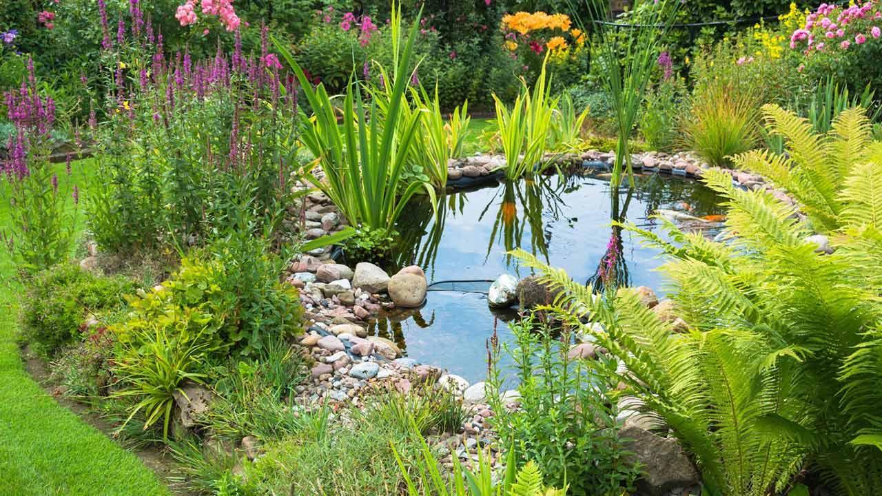 Gewässer im eigenen Garten anlegen / Teich mit viel Grün