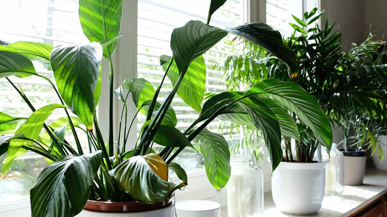 Schöne Sommerdeko auf dem Fensterbrett / viele verschiedene Pflanzen am Fensterbrett