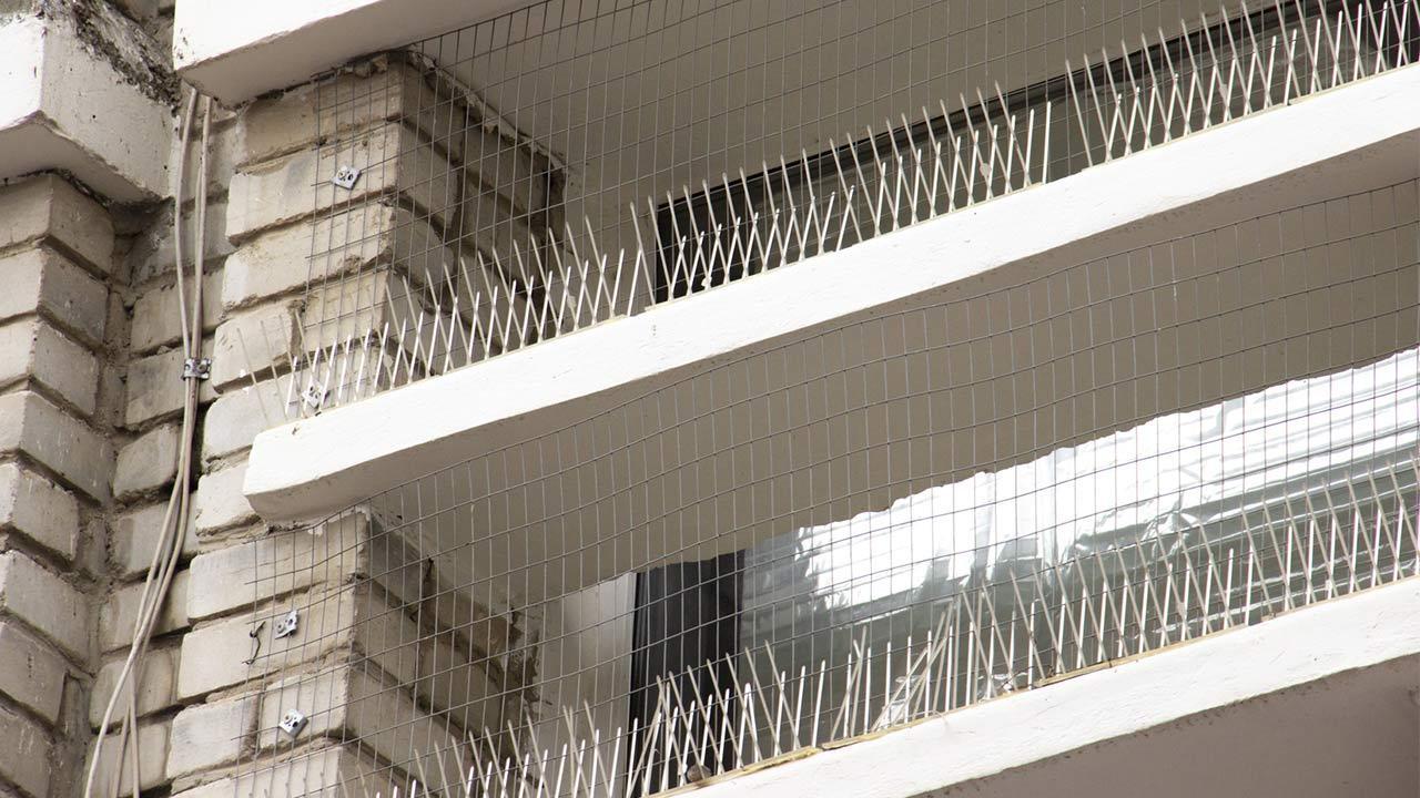 Schädlingsbekämpfung - Tauben / geschützter Balkon mit Plastik spikes