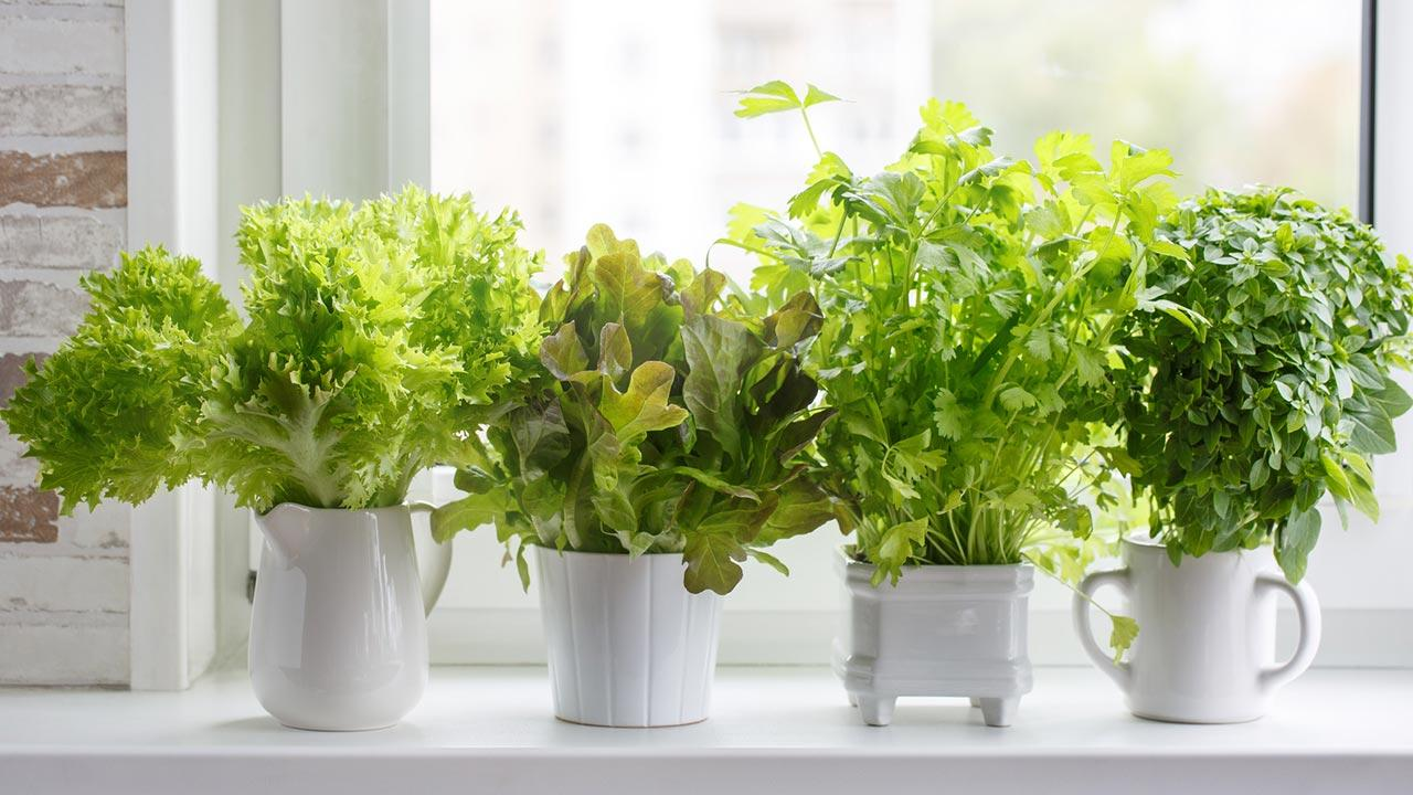 Sommersalat mit eigenen Kräutern pimpen / mehrere Kräuter am Fensterbrett