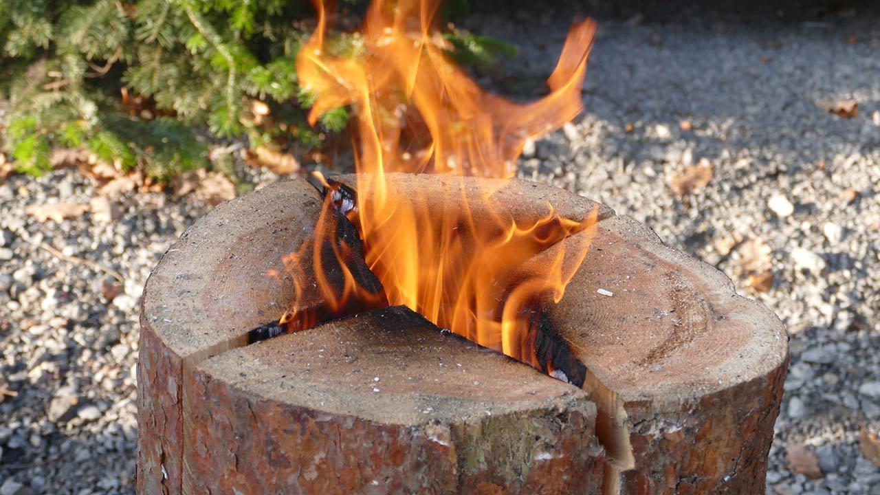 Schwedenfeuer für meinen Garten / Nahaufnahme eines Schwedenfeuers