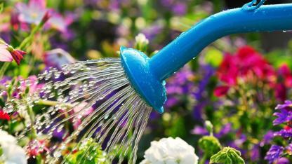 Garten bewässern im Spätsommer