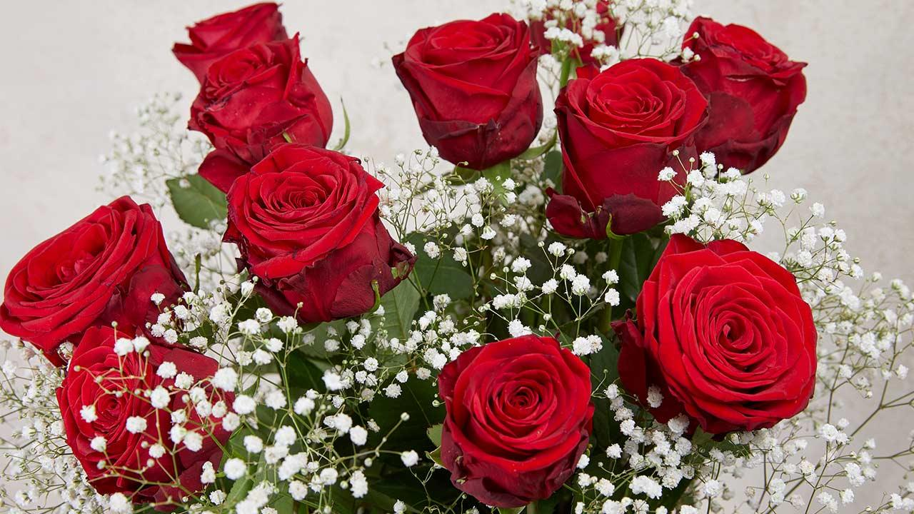 Wie ihre Valentinstagsrosen länger frisch bleiben / frische rote Rosen
