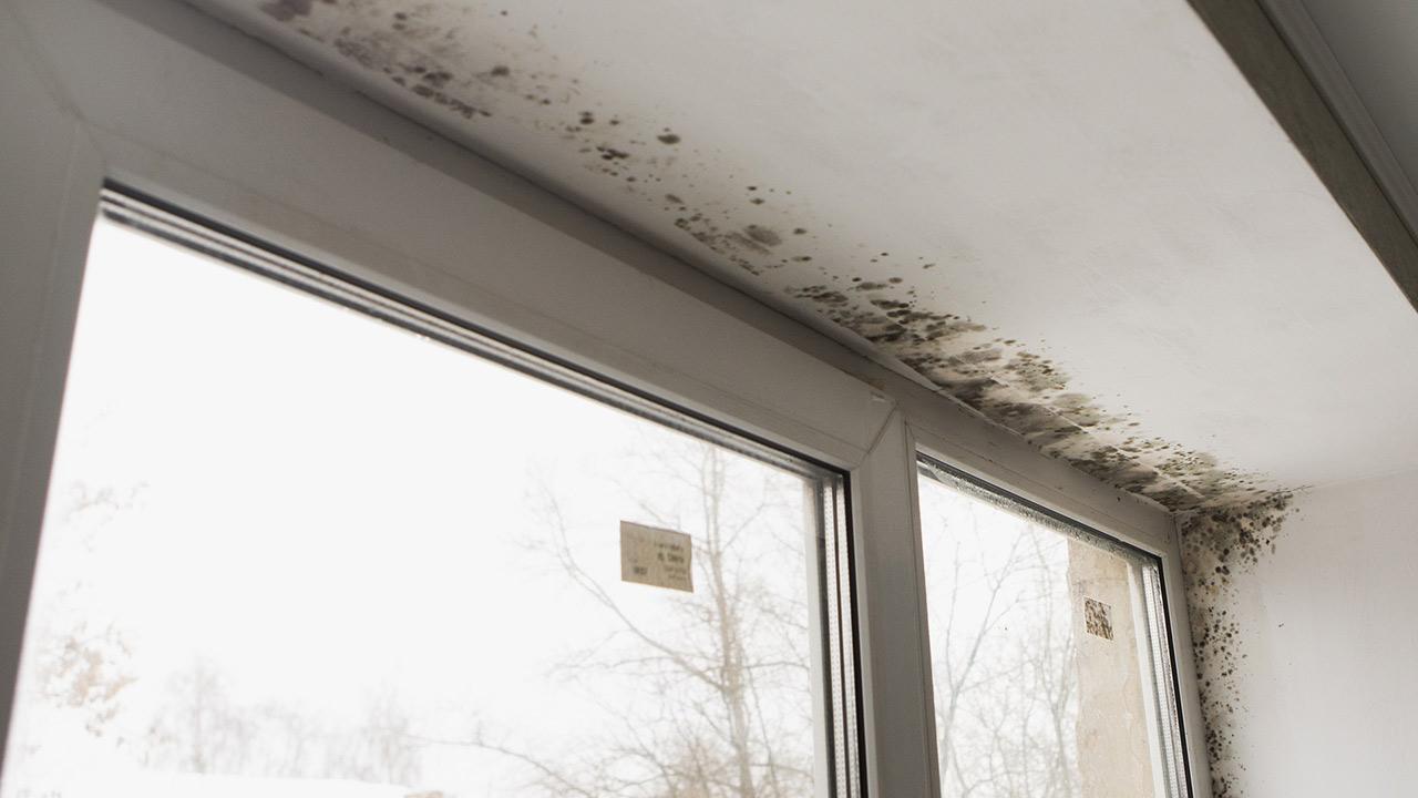 Schimmel an der Wand - Was tun - Schimmel bei einem Fenster